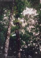 03_1993_Reise1_ Gran Sabana_Venezuela_ (5)