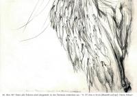 Träume der Wölfin (125)